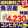 特選 29年産魚沼産コシヒカリ 5kg