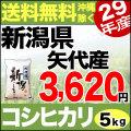 【地域限定】29年産新潟県矢代産コシヒカリ 5kg