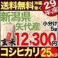【地域限定】29年産新潟県矢代産コシヒカリ玄米 小分け5袋 25kg