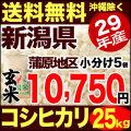 29年産新潟県蒲原産コシヒカリ 玄米 小分け5袋 25kg