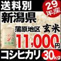 29年産新潟県蒲原産コシヒカリ 玄米 30kg 小分け6袋【送料別】