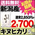 29年産新潟県産キヌヒカリ 5kg【おすすめ銘柄セール!】