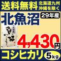【地域限定】29年産新潟県北魚沼産コシヒカリ 5kg