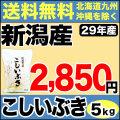 29年産新潟県産こしいぶき 5kg