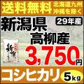 【地域限定】29年産新潟県高柳産コシヒカリ 5kg