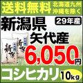 【地域限定】29年産新潟県矢代産コシヒカリ 10kg(5kg×2)