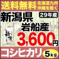 29年産新潟県岩船産コシヒカリ 5kg