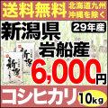29年産新潟県岩船産コシヒカリ 10kg(5kg×2)