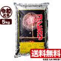 新米 令和元年産新潟産コシヒカリ花火 5kg