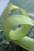 フランス製ワイヤーリボン・スタンダード French green 25ミリ幅