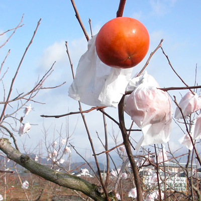 特選富有柿
