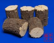クヌギ産卵木Mサイズ5本セット 太さは約9センチ~10センチ