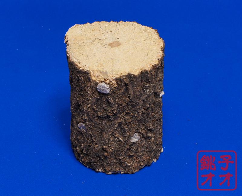 クヌギ産卵木Mサイズ1本 太さは約9センチ〜10センチ