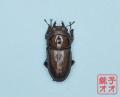 オオクワガタ成虫 49.5mm メス単品 18年羽化新成虫能勢YG血統 銚子オオブリード個体 yg1809231601