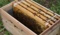 【今だけ箱代無料】【交配用】有王 蜜蜂8000匹 中古箱