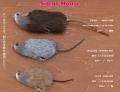 ムチョウワークス 「サイレントマウス」