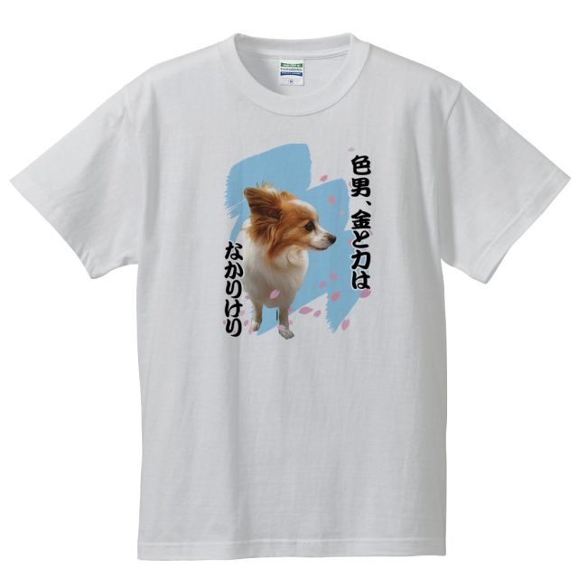 犬 パピヨン T