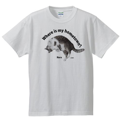 奈良模様猫
