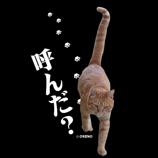 Tシャツ半袖ブラック実写猫柄「呼んだ?」拡大図