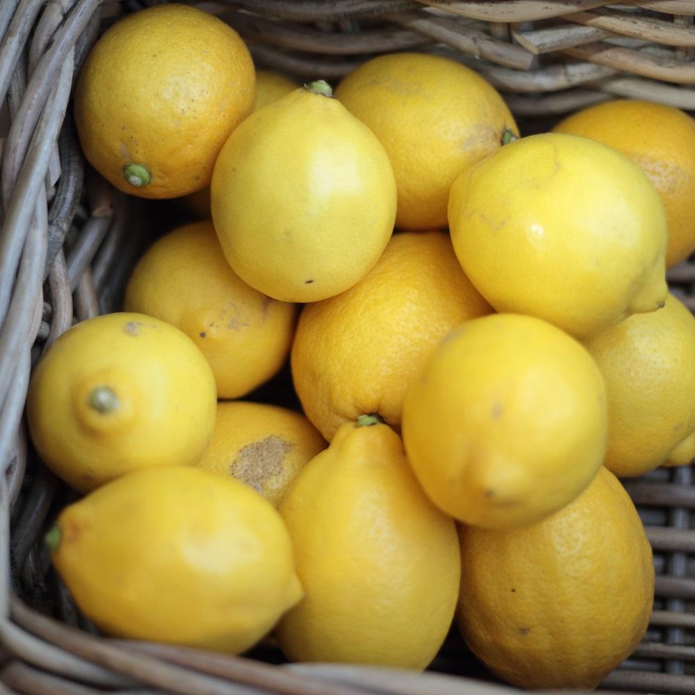 【 瀬戸田(瀬戸内)ワケあり無農薬レモン2キロ限定 (ワックス・防カビ剤・防腐剤不使用。 無化学肥料/残留農薬検査200項目不検出) 】※1kg約7~12個.※つど、収穫しますのでタイミングによってはお届けまでお時間を頂くこともございます。。