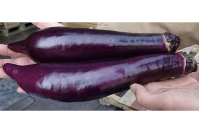 赤茄子 1本 (熊本産など)
