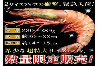 超特大サイズの天然エビ(シータイガー) 1尾=1600円  産地:ミャンマー *加熱用/冷凍