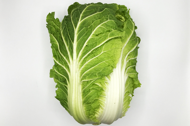白菜 1個 (長野産など)