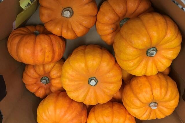 オレンジミニパンプキン1セット (3個手のひらサイズ)
