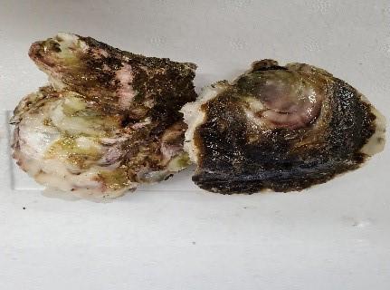 みじょか牡蠣(岩牡蠣)/要冷蔵  産地:長崎県五島列島   *画像は2個ですが、価格は1個の値段です