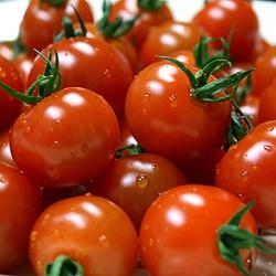 ミニトマト 青森産など 1パック:200g