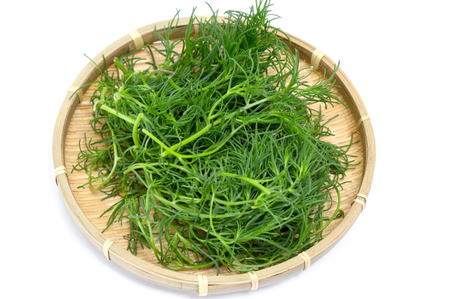 栄養抜群 おかひじき(千葉・山形県産など) 1パック 100g