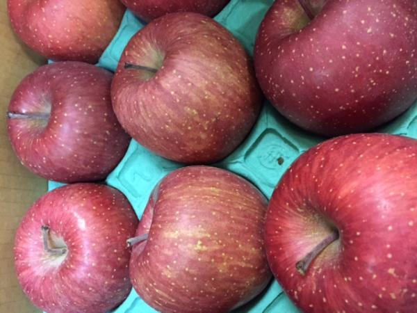 りんご  青森産など 1個 (ふじ/サン津軽)