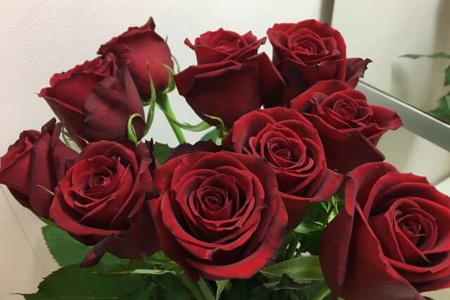 火、土曜日お届け お届け日の3日前までご注文でお届け バラ(赤)サムライ8 切り花60センチ前後 1束10本