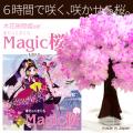 【メール便 送料無料】マジック桜ミニ 【木花咲耶姫ver.】 2~3営業日(土日祝日除く)で出荷