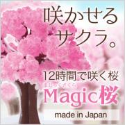 マジック桜 Magic桜【日本製】 2~3営業日(土日祝日を除く)で出荷