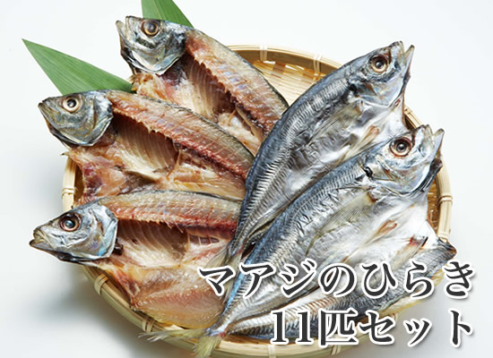 マアジのひらき 11枚  【あじの干物】