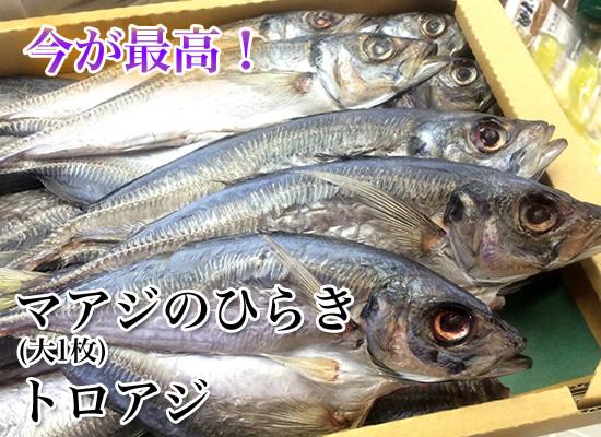 マアジのひらき 大1枚 (トロアジ)  【鯵の干物】