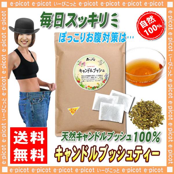 B2【お徳用TB送料無料】 キャンドルブッシュ (2g×80p) ハーブ・食物繊維が豊富 ◆ ゴールデンキャンドル・ハネセンナ