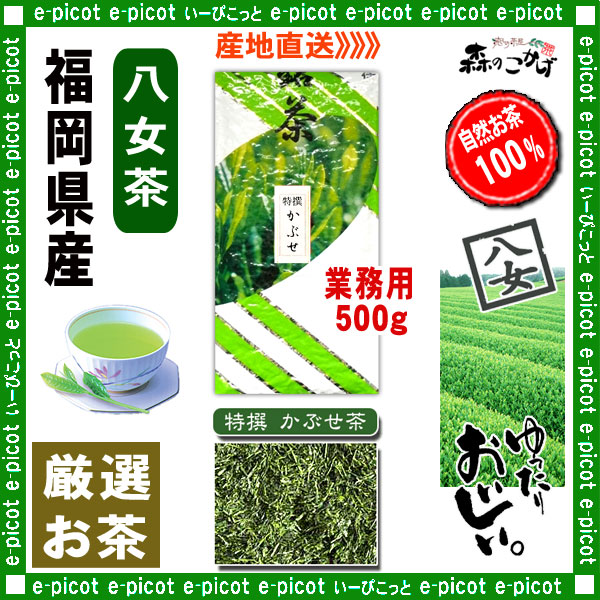Y1【八女茶】 特選 かぶせ茶 〔業務用 500g〕 ◆ 福岡県-日本茶 -厳選の緑茶
