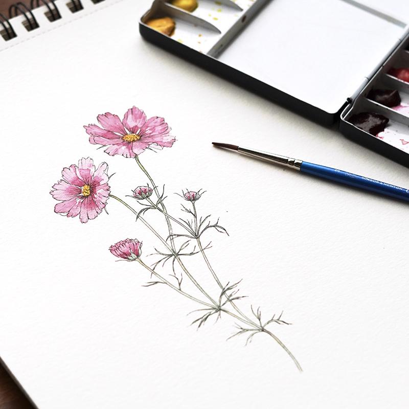 Shiho Sakurai - ボタニカルイラスト水彩コース(全5回)