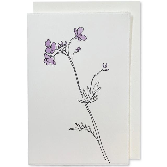 Scribble & Daub/シングルカード/Cuckoo Flower