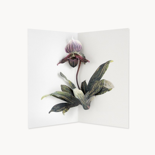 UWP LUXE/シングルカード/Lady Slipper Orchid by Hiromi Takeda
