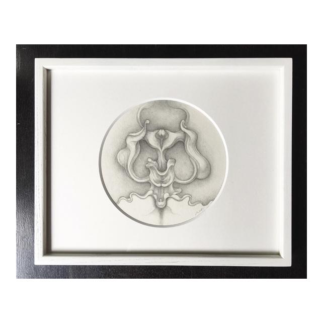 phalaenopsis_1.jpg