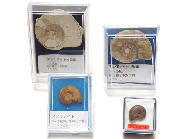 化石セット