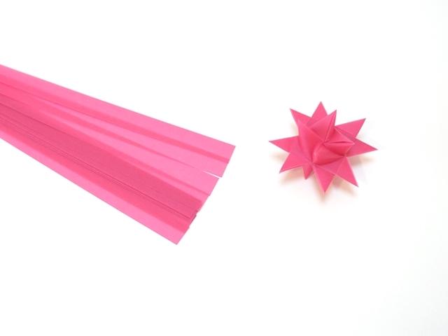 フレーベルの星 ローズ1.5センチ1