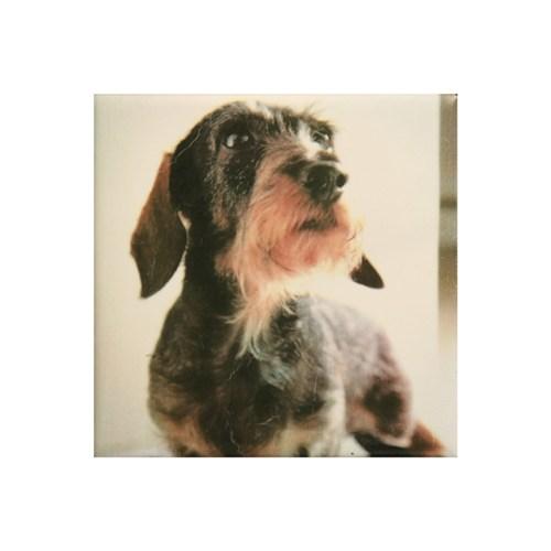ペットのお墓写真陶板フルカラー100