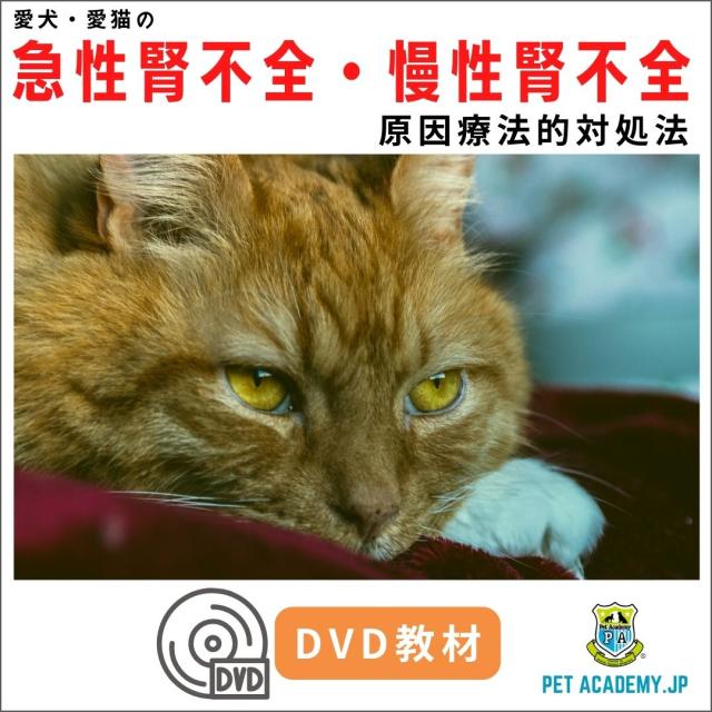 【動画配信】 愛犬・愛猫の急性腎不全・慢性腎不全セミナー2020