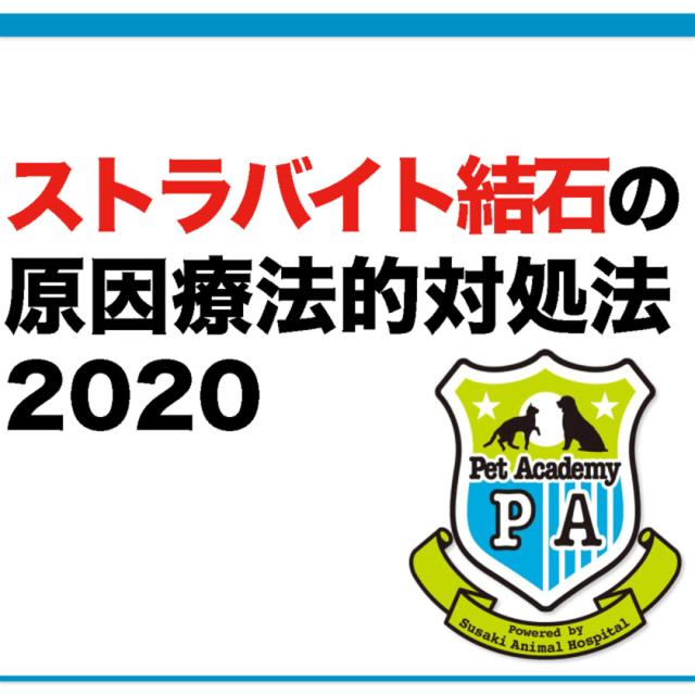 【動画配信】 愛犬・愛猫のストラバイト尿結晶&結石症セミナー2020