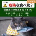 2012年11月号「犬と猫に危険な食べ物?(その3)禁止食材の根拠は?~ 鶏の骨、青背の魚、鰹節、キャベツ、ジャーキーほか ~」