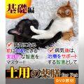 犬猫の薬膳 土用 2017 基礎編 - 土用を快適に乗り切る -
